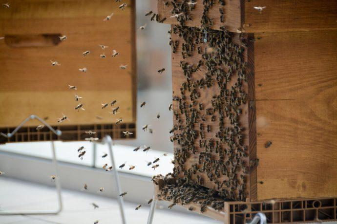 Une des 3 ruches installées sur une terrasse du bâtiment Visalto du Rectorat de Paris en 2017.